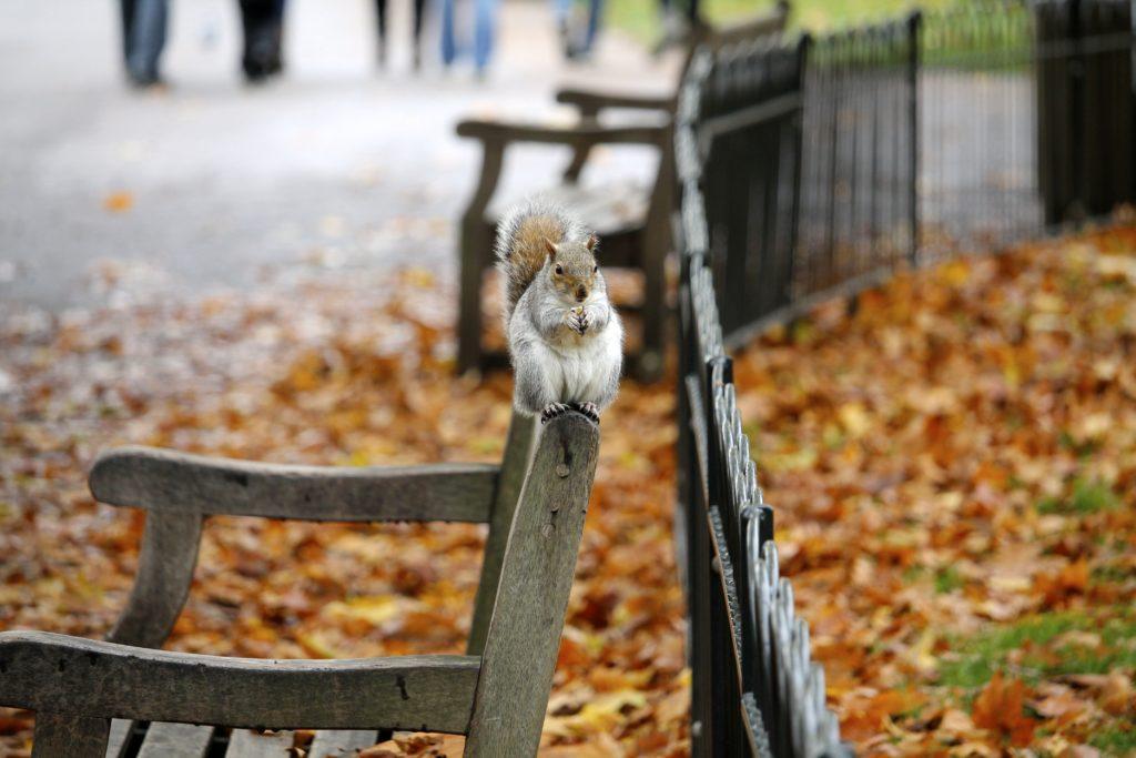 Healthy Autumn Tips - Northern Yogi